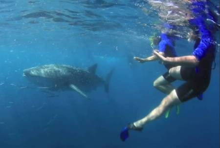 Michelle and Paul Swiming with Whale Shark